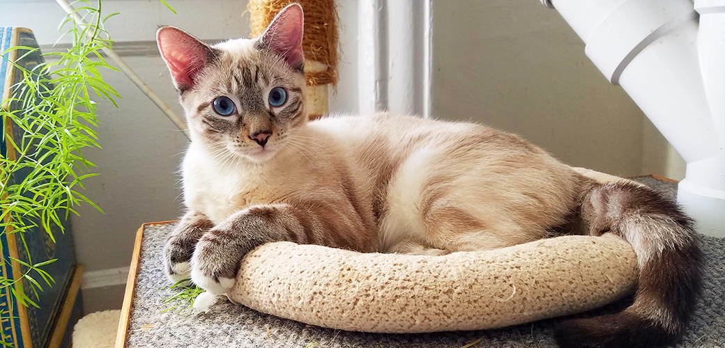 Happy Tails: Creme