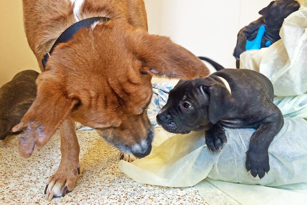 ASPCA Happy Tails: Crimson's Story