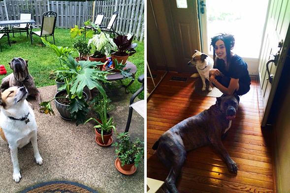 ASPCA Happy Tail: A Dash of Hope