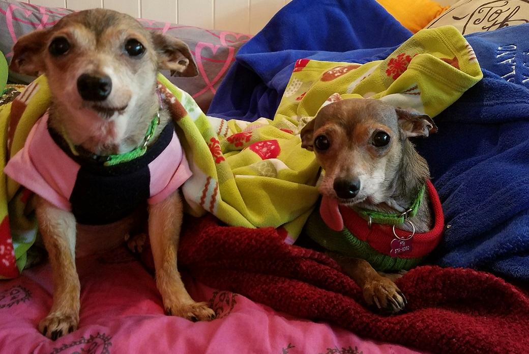 Grace and Karen resting in blankets