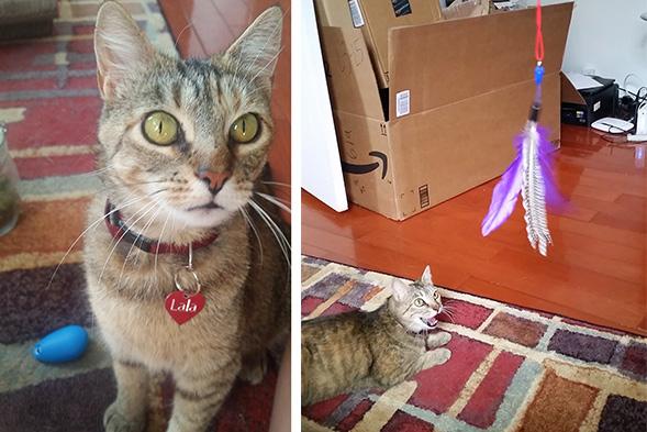 ASPCA Happy Tails: Lala Loves Ya