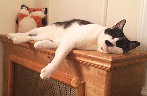 ASPCA Happy Tails: Loving Lila