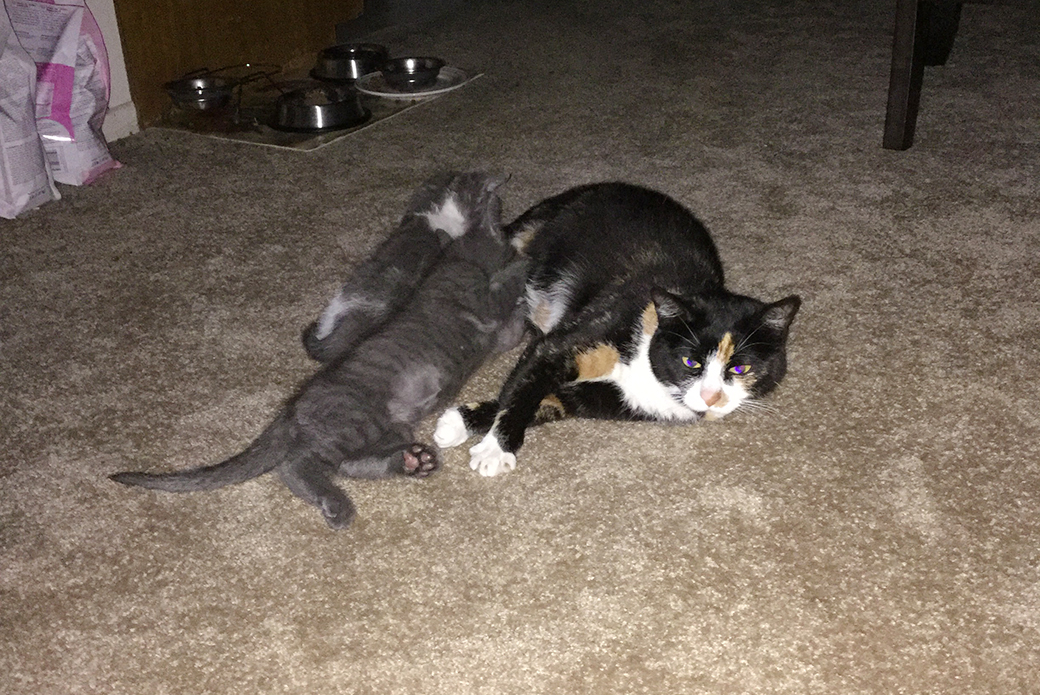 Magnolia and her new kitten friends