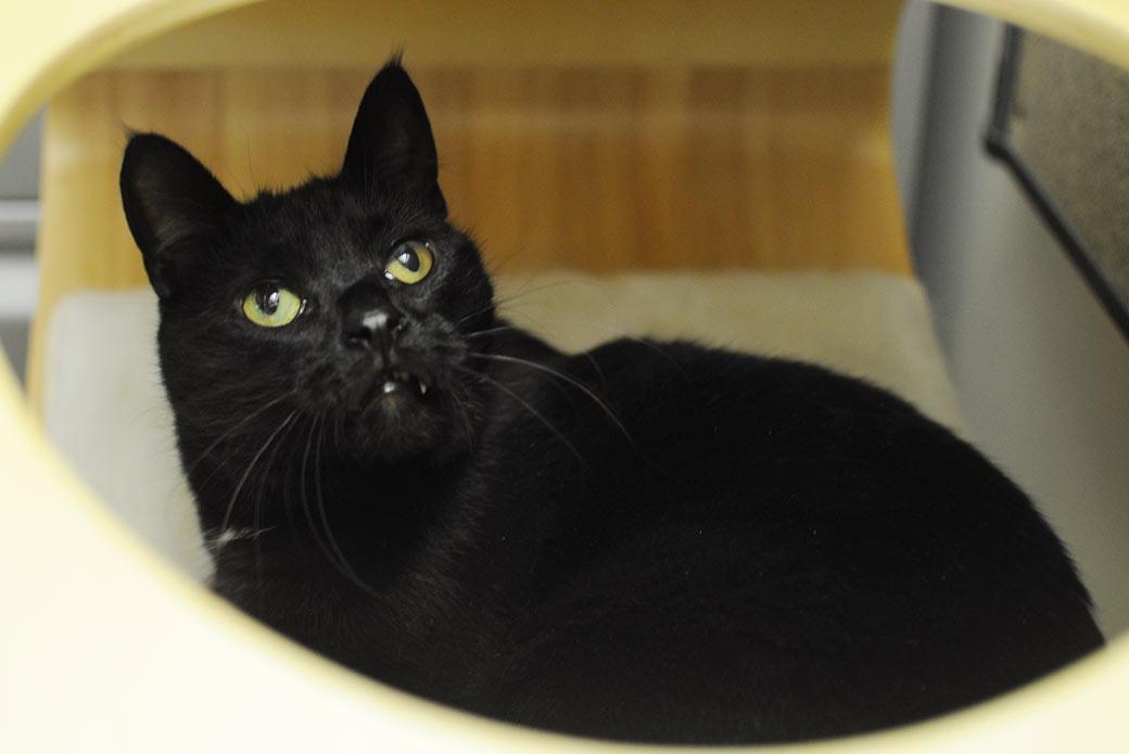 Nino in a cat condo