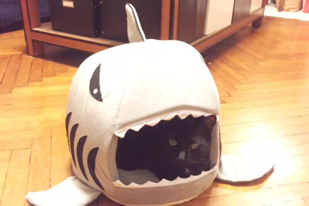 Nino in a shark bed