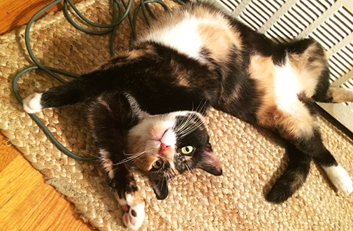 ASPCA Happy Tails: A Perfect Place for Penelope