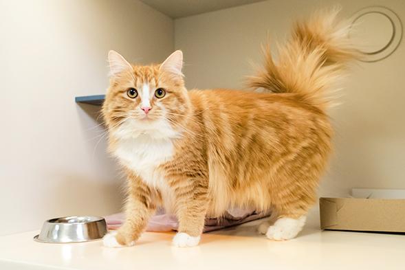 Precious at the ASPCA Adoption Center