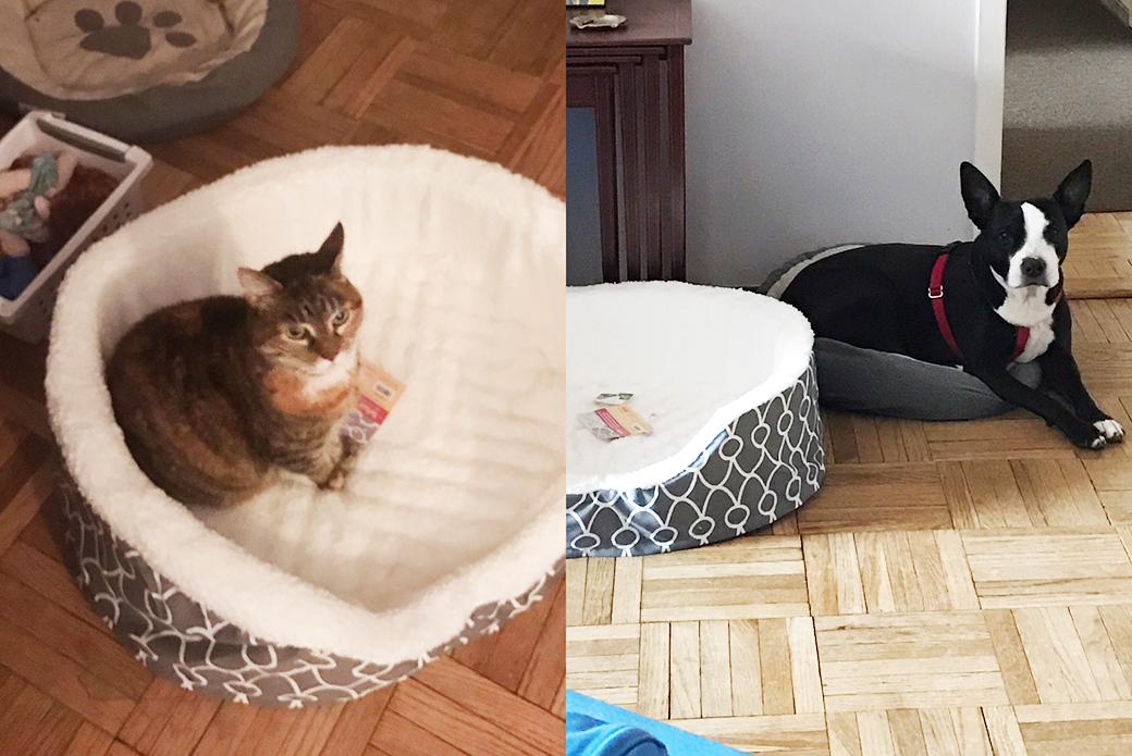 Tahini and Rachel's cat
