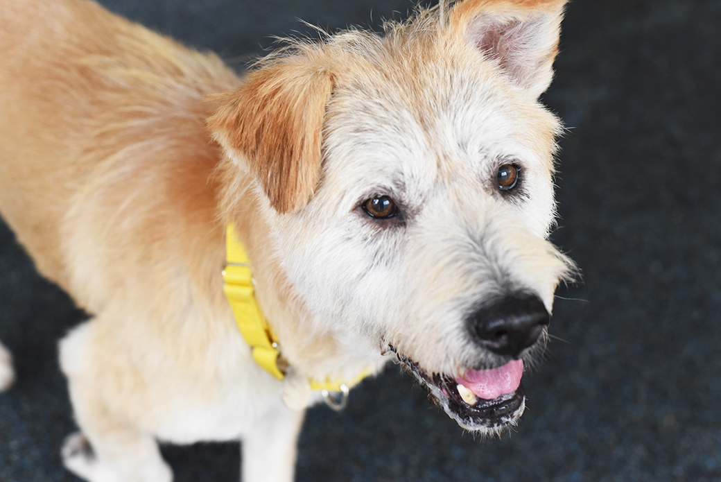 A Home to Grow Old In: Thelma's Happy Tail