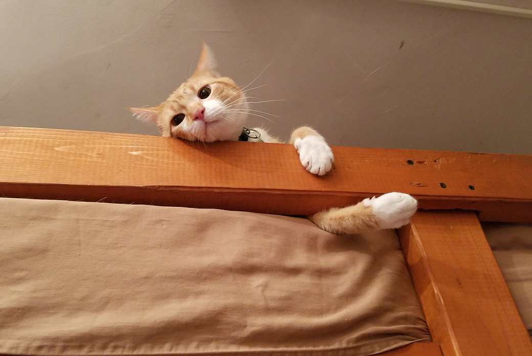 Tobias on a bed