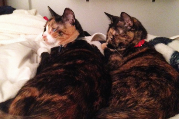 ASPCA Happy Tails: A Bright Future for Hilary and Wendy