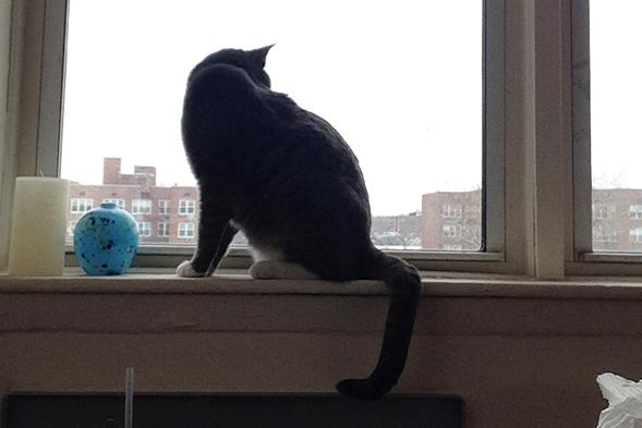 ASPCA Happy Tails: Godzilla Takes New York