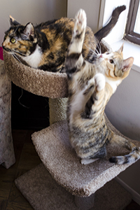 Cats hanging out on cat tree