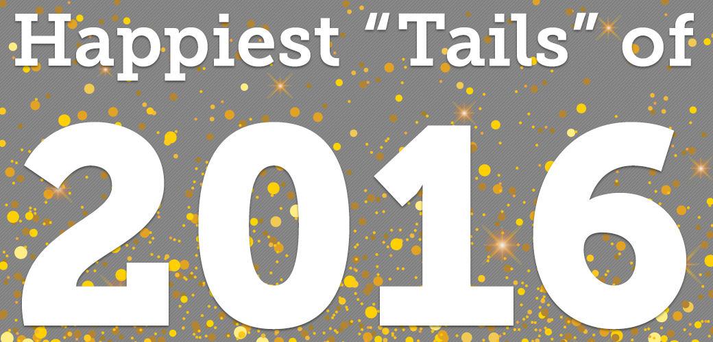 Counting Down an Incredible Year of Happy Tails!