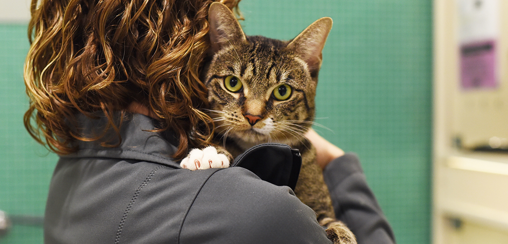 ASPCA Happy Tails: There's Something About Curry