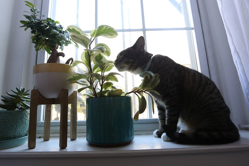 Piglet smelling a plant