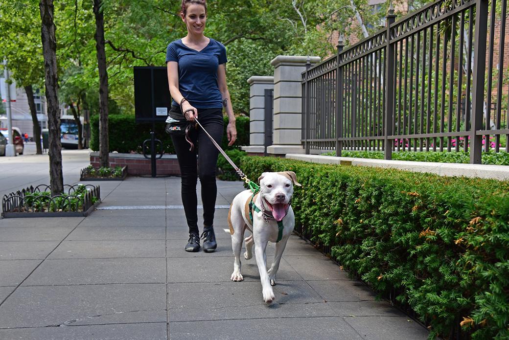 Cassie on a walk