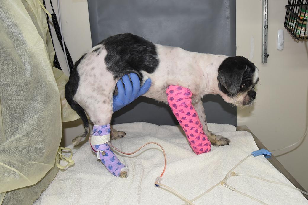 chaplin after treatment