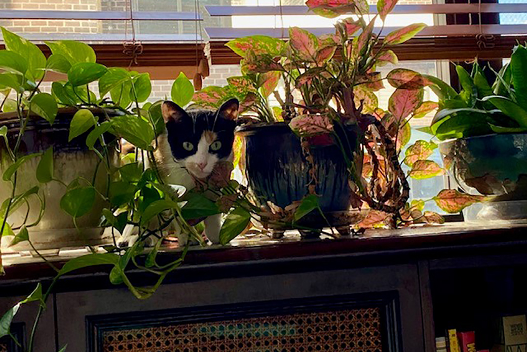 Cinnamon playing in house plants