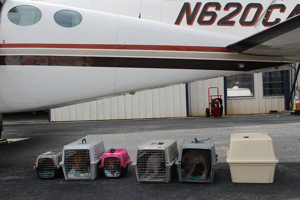 rescued animals ready for transport