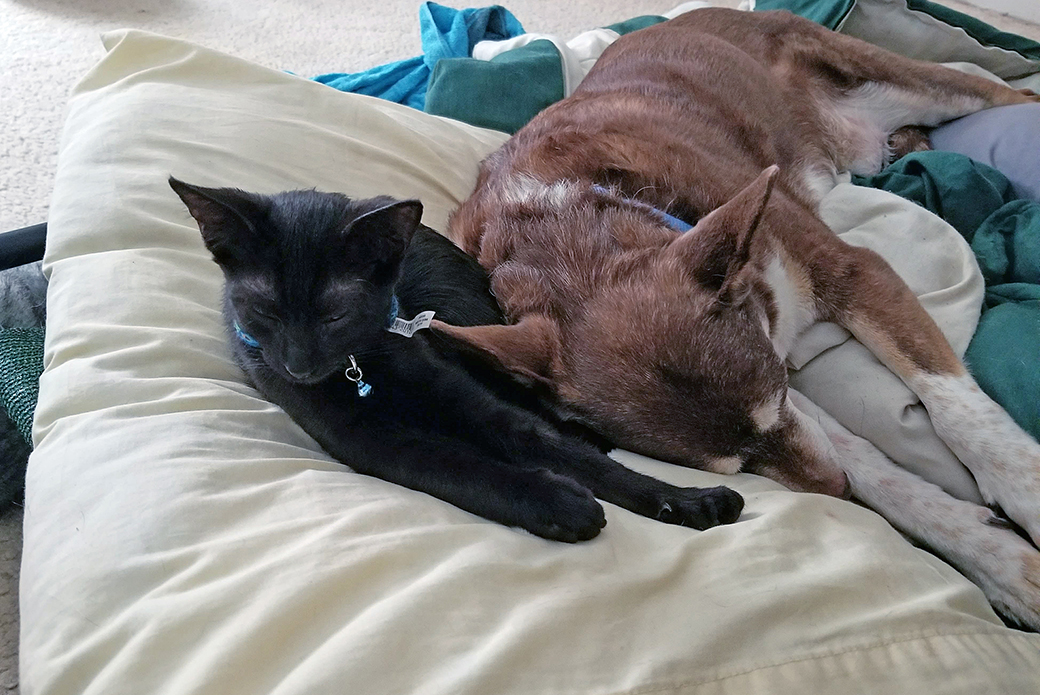 One of the rescued cats and Steven's dog