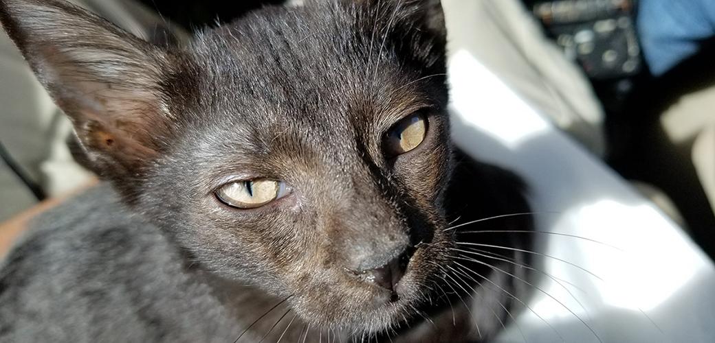 a rescued cat