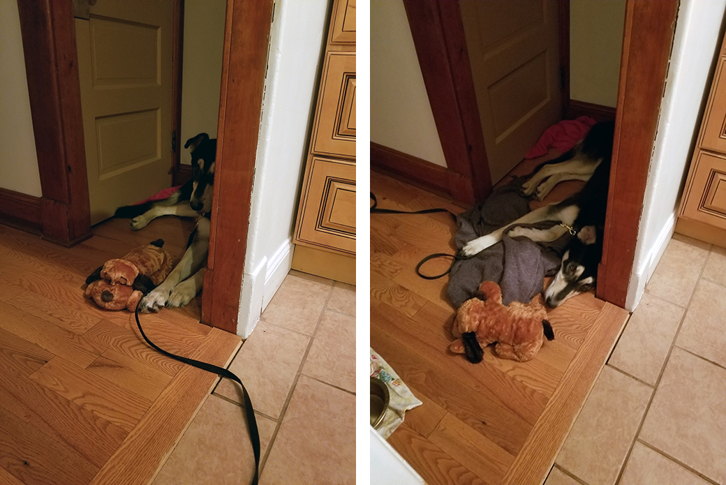 Dexter in a closet