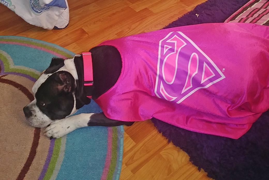 Fajita in a pink superman cape