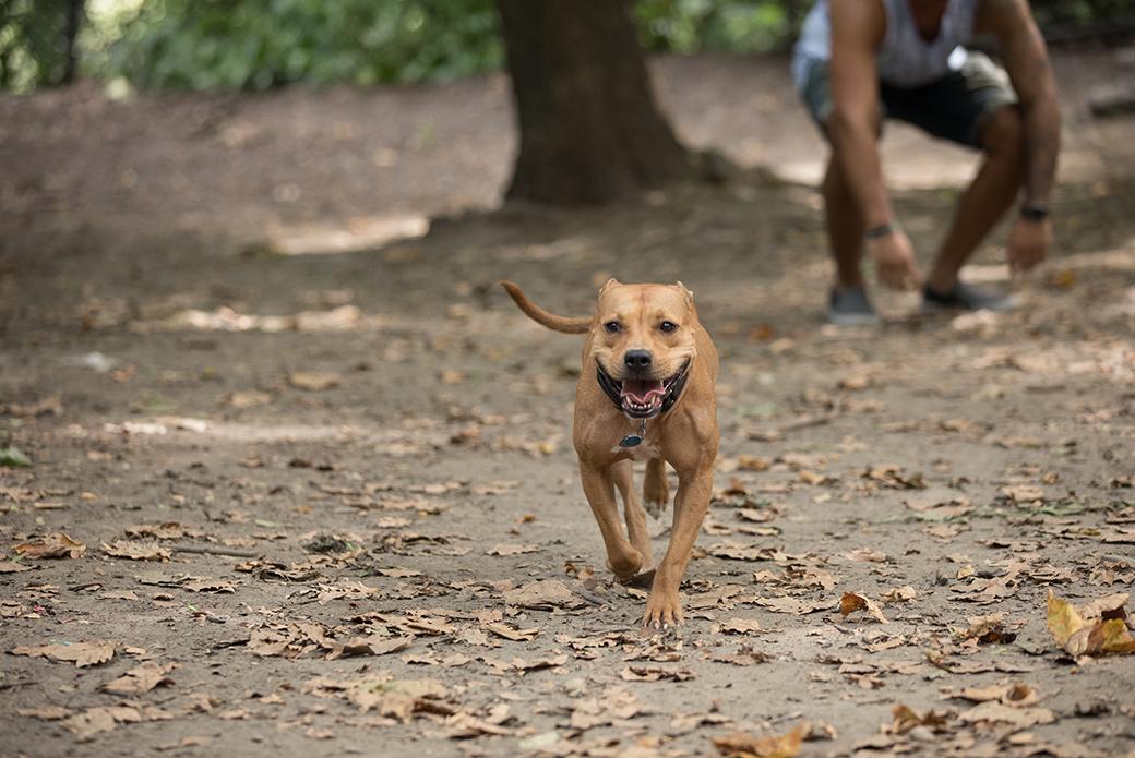 Frannie running