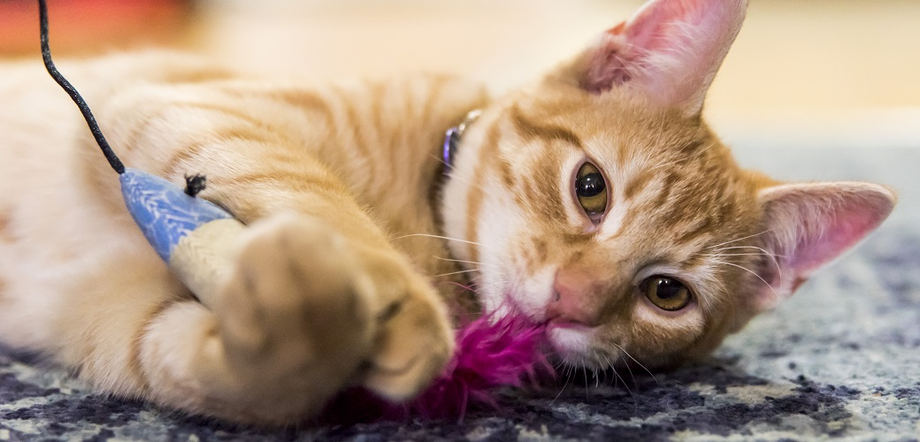 Happy Tails: Frederico