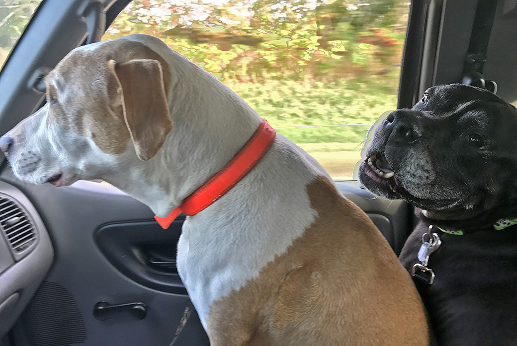 Howdy and Newton taking a ride in a car