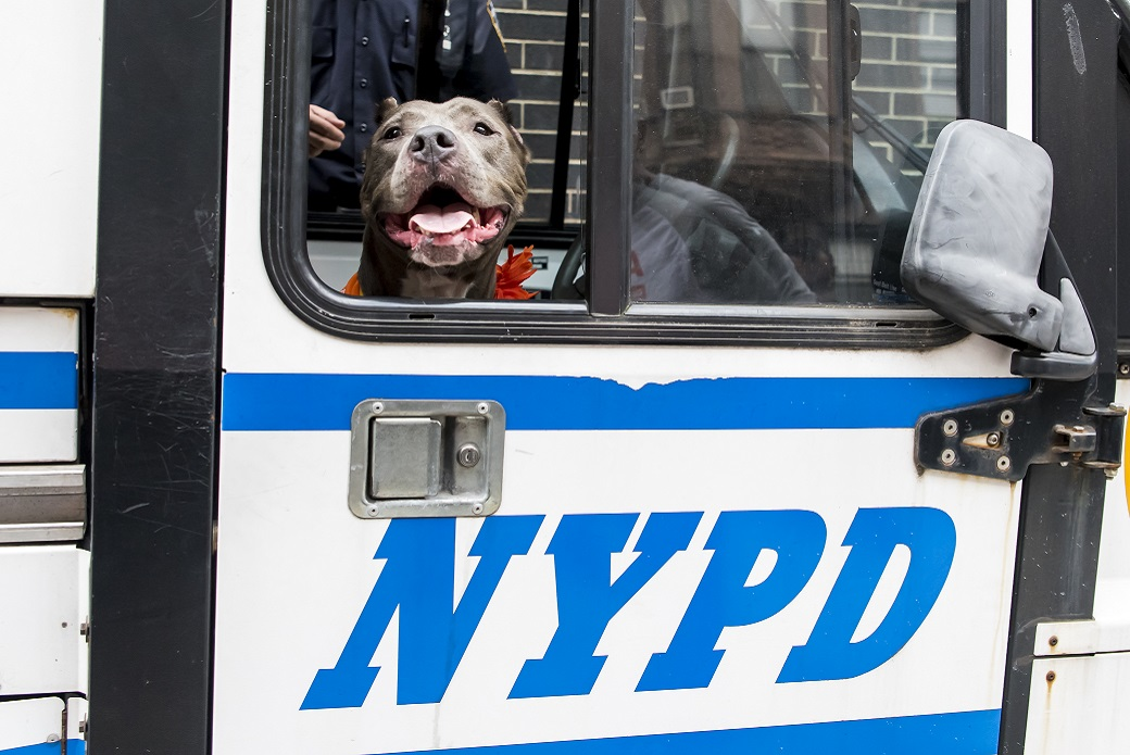 Jamie with the NYPD