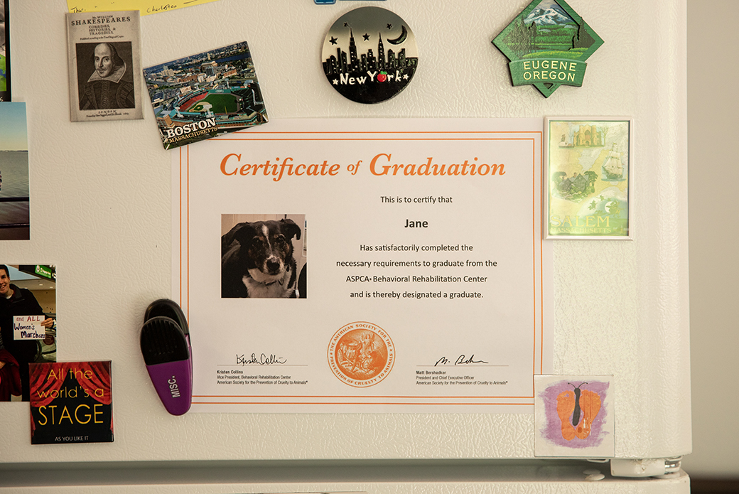Lily's graduation certificate