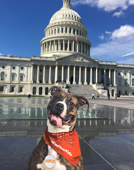 Fido at the Capitol