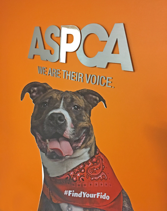 Fido at the ASPCA