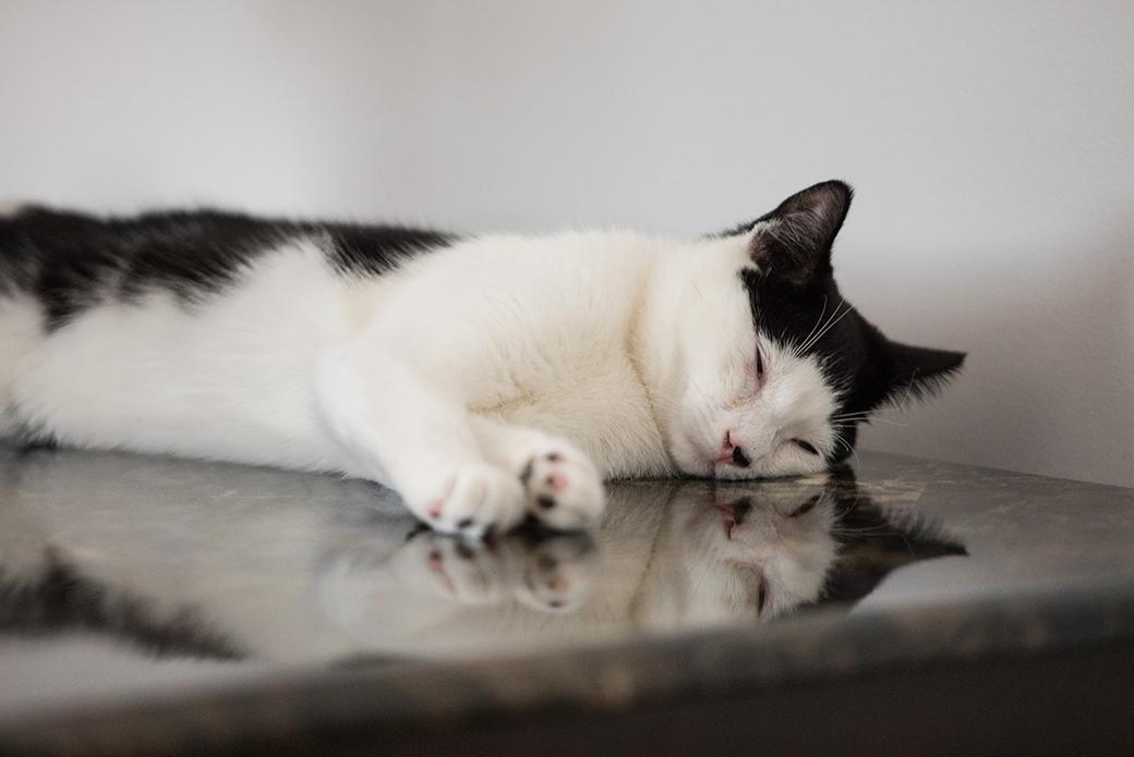 Muezza sleeping