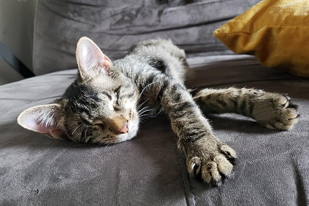 murdock resting