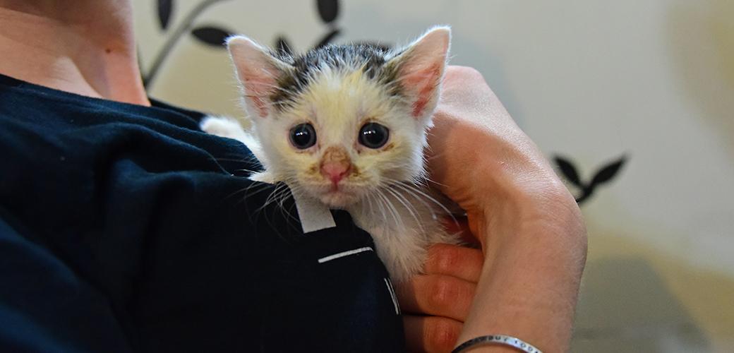 Nala as a kitten