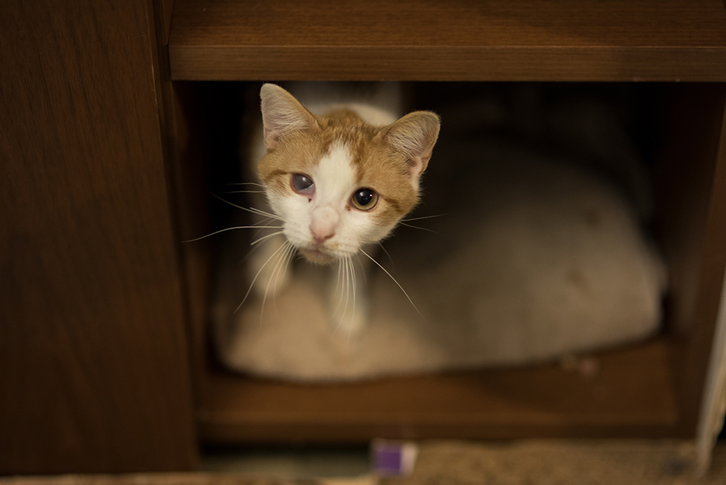 Neko hiding in a cabinet