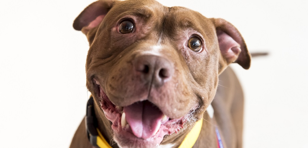 Happy Tails: Sammi