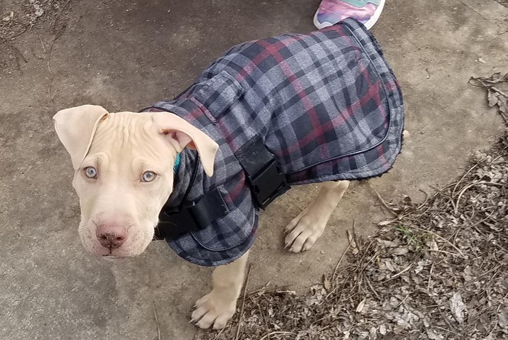 Xander in a coat