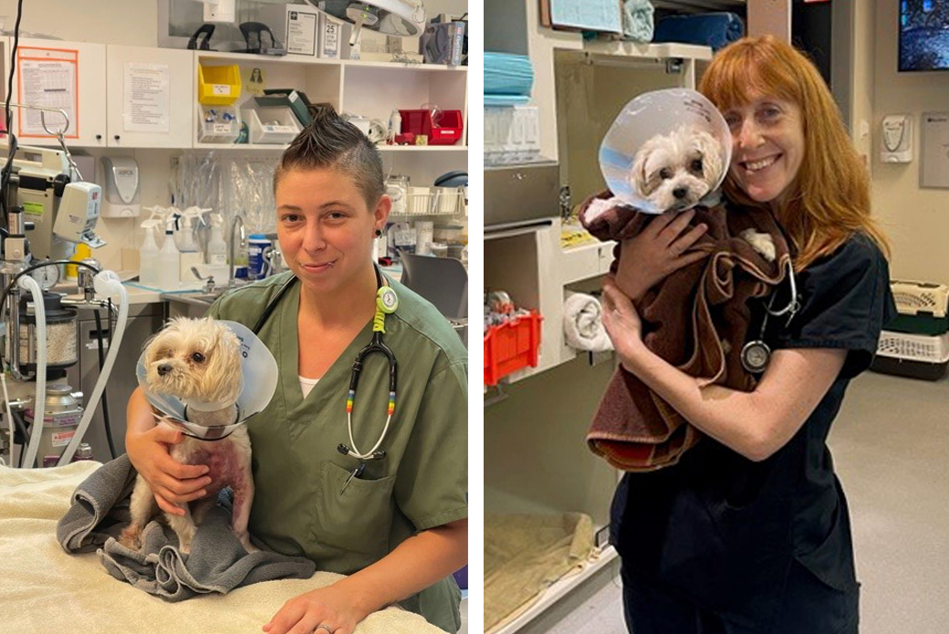 Dog at ASPCA Animal Hospital