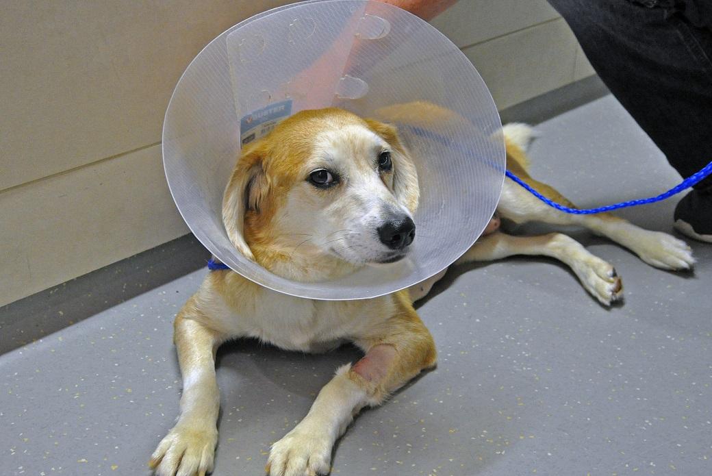 Riley post surgery