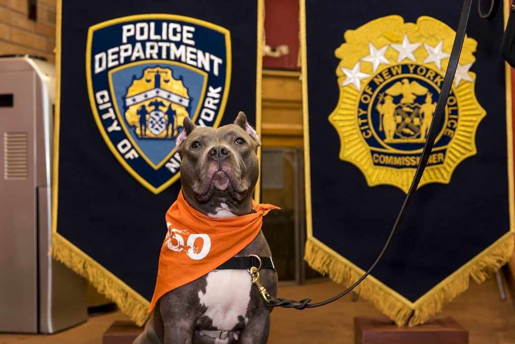 On the job with the NYPD.