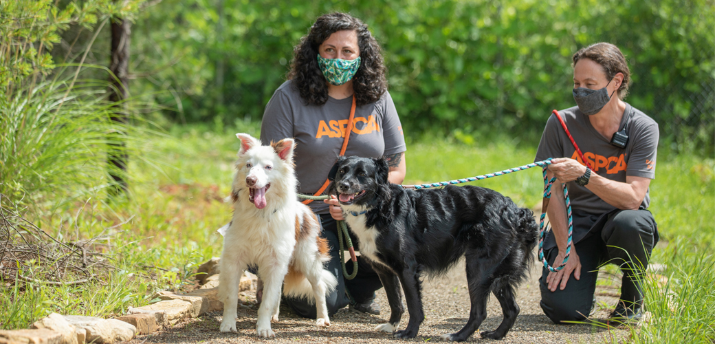 Black and white dogs with humans on walk