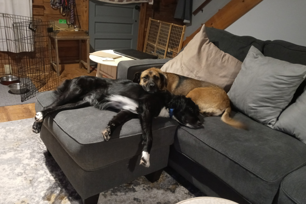 Dogs sleeping on a couch