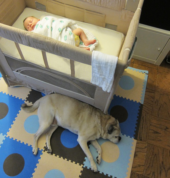 Dog asleep next to a baby also sleeping in a crib
