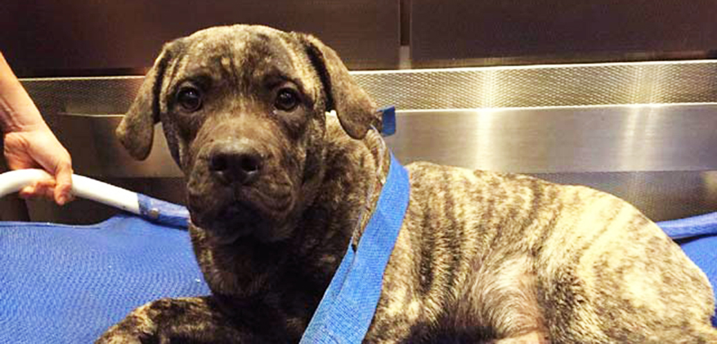 High Stakes Rescue: NYPD Recovers Injured Puppy from Busy New York City Roadway