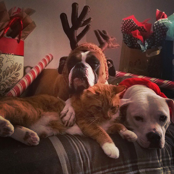 Two dogs and a cat laying on a couch