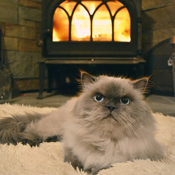 Fluffy cat in front of fire place